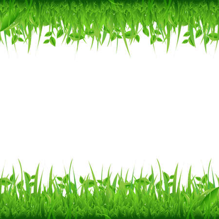 blades of grass: Grass Borders, Isolated On White Background, Vector Background Illustration