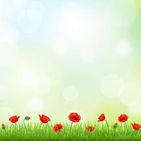 mák: Red Poppy A Grass Border, Vector Background