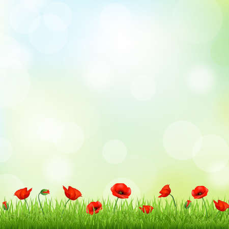 field of flowers: Red Poppy And Grass Border, Vector Background Illustration