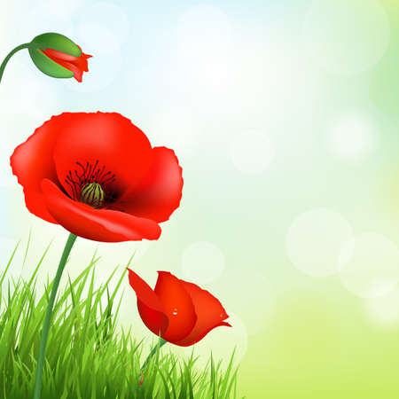 Red Poppy And Green Grass, Vector Background Illustration