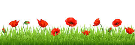 Red Poppy Border, Isolated On White Background, Vector Background Vector