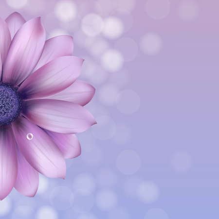 flores moradas: Lila Gerber Con Gota de Agua, Ilustraci�n Vectorial Vectores
