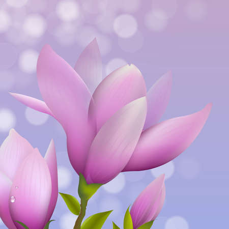 magnolia flower: Magnolia With Water Drop, Vector Illustration