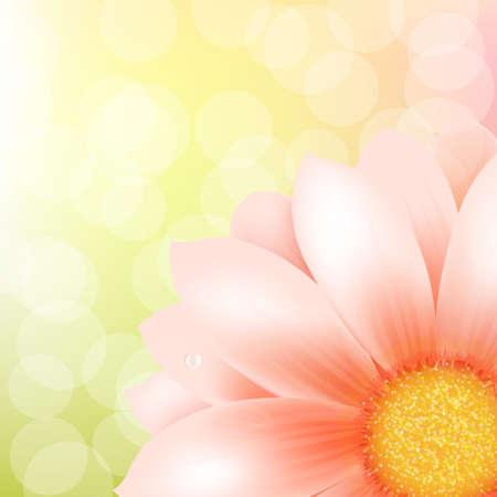 gerber: Pink Gerber And Bokeh, Vector Illustration