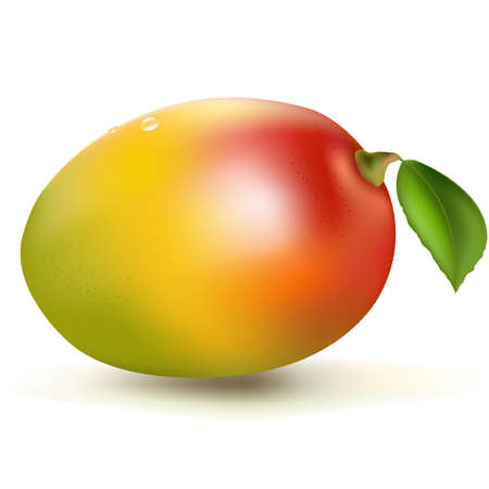 mangoes: Fresh Mango, Isolated On White Background, Vector Illustration