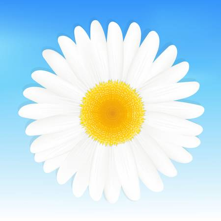 margerite: One Daisy Against Blue Sky, Vector Illustration