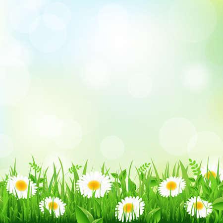 daisy vector: Green Grass Border And Daisy, Vector Illustration Illustration