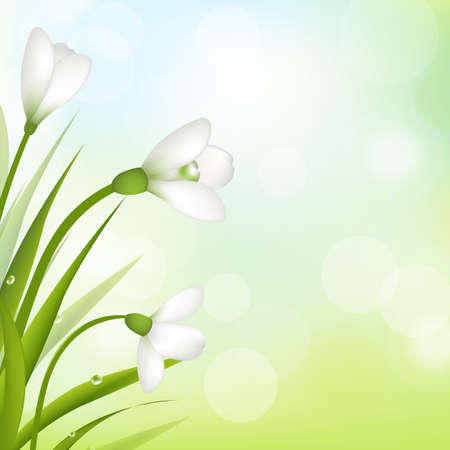 3 Snowdrops With Bokeh And Leaf, Vector Illustration Vector