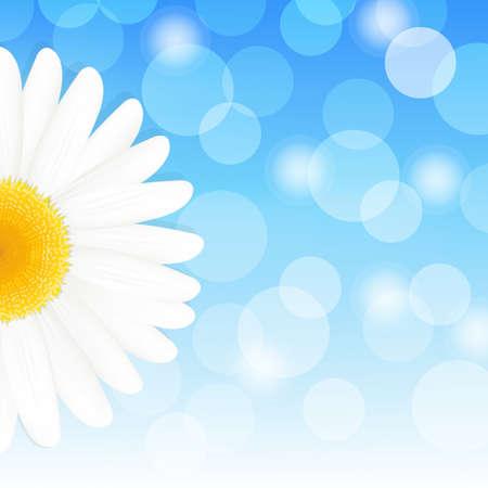daisy vector: Flower Daisy And Blue Sky, Vector Illustration
