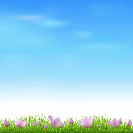 sunlight sky: Landscape With Grass And Crocus, Vector Illustration