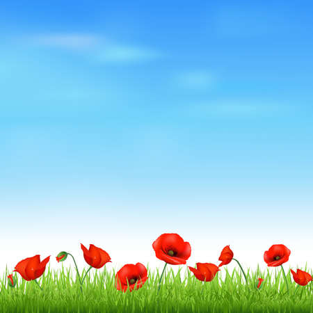 poppy field: Landscape With Grass And Poppy, Vector Illustration