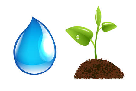 Water Drop And Green Sprout Vector