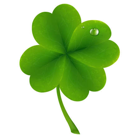 festal: Lucky Clover, Isolated On White Background, Vector Illustration Illustration