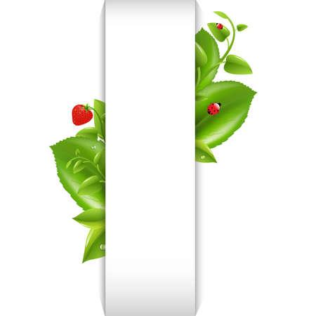 Nature Background With Leaf And Ladybug, Isolated On White Background Illustration Stock Vector - 15069723