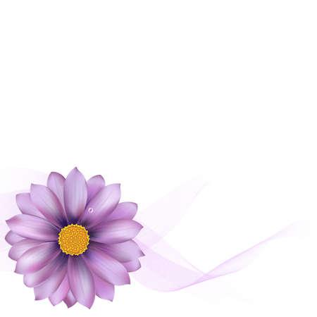gerber: Purple Gerber With Blend, Isolated On White Background Illustration Illustration
