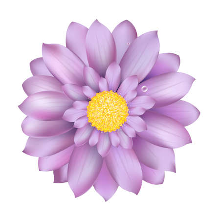 flowerhead: Fresh Lilac Gerber, Isolated On White Background, Vector Illustration