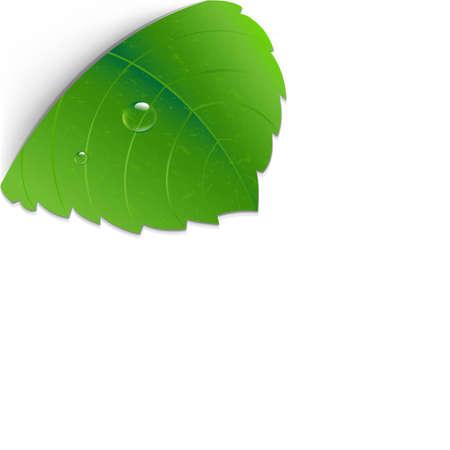 leaf water drop: Green Leaf Corner With Gradient Mesh,Illustration Illustration