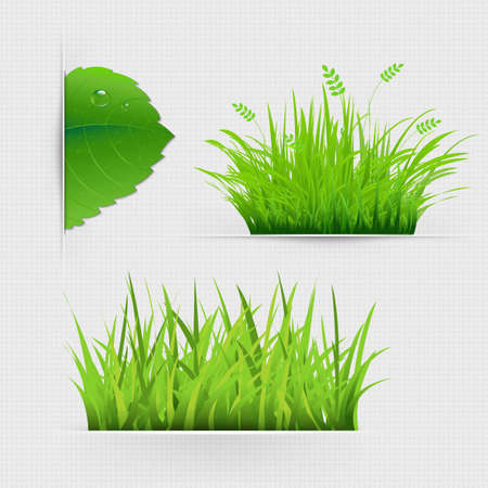 Set Of Dividers With Grass With Gradient Mesh, Vector Illustration Vector
