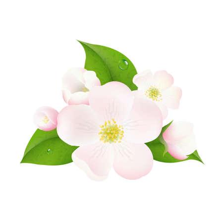 indoor bud: Apple Tree Flowers, With Gradient Mesh, Vector Illustration