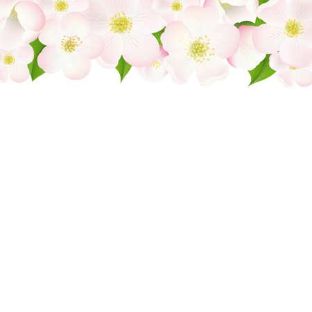 indoor bud: Apple Tree Flowers Border, With Gradient Mesh, Vector Illustration