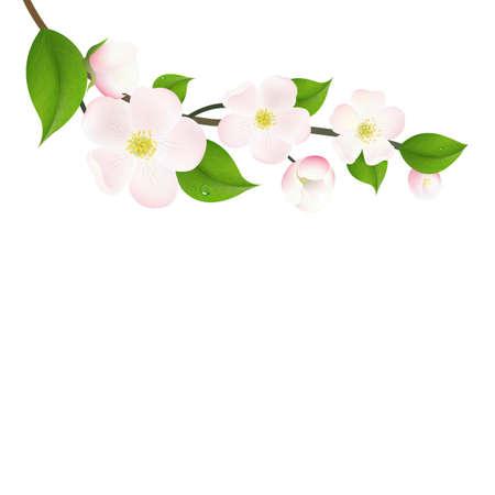 Pastel Apple Tree Flowers, With Gradient Mesh, Vector Illustration Illustration