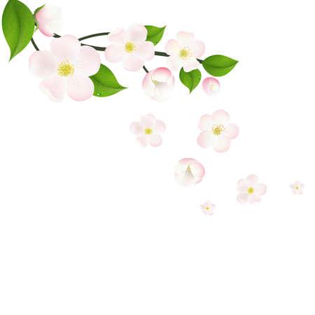 indoor bud: Pink Apple Tree Flowers Border, With Gradient Mesh, Vector Illustration