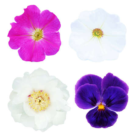 4 Flowers, With Gradient Mesh, Isolated On White Background Illustration
