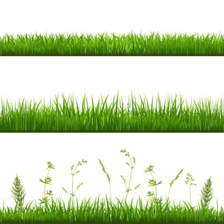 meadow  grass: Hierba Fronteras, con malla de degradado Ilustraci�n Vectores