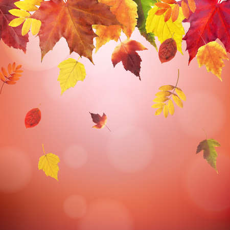 aronia: Autumn Red Vintage Border With Gradient Mesh, Vector Illustration Illustration