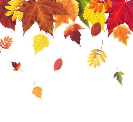 aronia: Autumn Retro Vintage Border, Vector Illustration