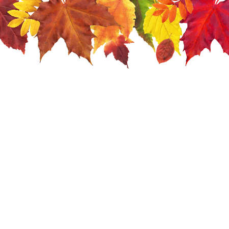 chokeberry: Leaves Border, Vector Illustration