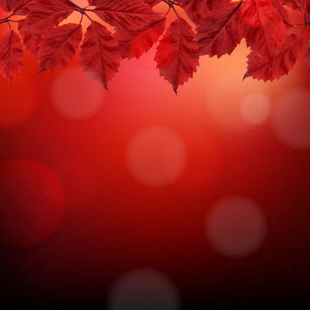 aronia: Red Autumn Background With Leaves With Gradient Mesh, Vector Illustration