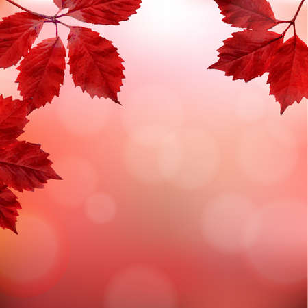 chokeberry: Red Border With Gradient Mesh, Vector Illustration Illustration
