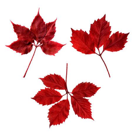 Red Leaves, Vector Illustration Stock Illustratie