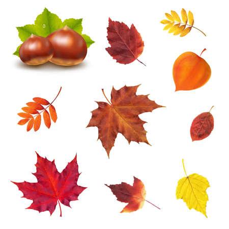 castaÑas: Conjunto de otoño con malla de degradado, ilustración vectorial