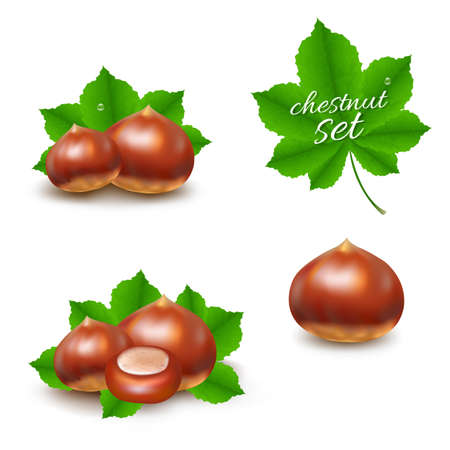 Chestnuts Set With Gradient Mesh, Vector Illustration Çizim