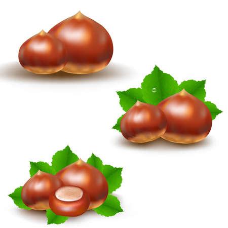 husk: Chestnuts Big Set With Gradient Mesh, Vector Illustration