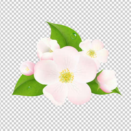 pistil: Beautiful Apple Tree Flowers With Transparent Background With Gradient Mesh, Vector Illustration Illustration