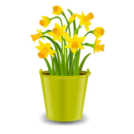 Narcissus In Pot With Gradient Mesh, Vector Illustration Illustration