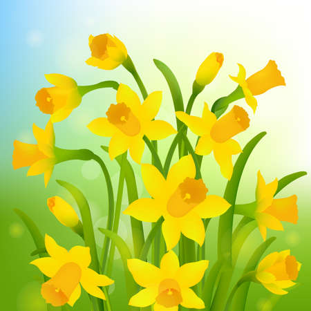 Spring Post Card With Narcissus Gradient Mesh, Vector Illustration. Illustration