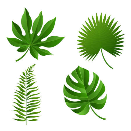 banana sheet: Tropical Leaf, Vector Illustration, With Gradient Mesh