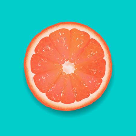 Grapefruit Segment Mint Background With Gradient Mesh, Vector Illustration