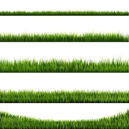 Grass Border Big Collection, Vector Illustration Ilustracja