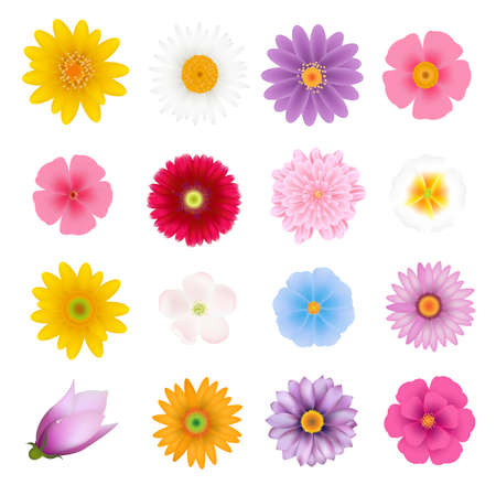 Summer Flowers Set With Gradient Mesh, Vector Illustration