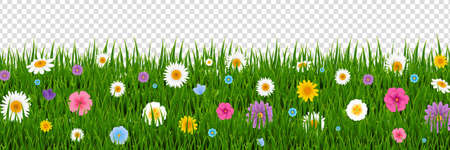 Green Grass And Flowers Border Transparent Background With Gradient Mesh, Vector Illustration
