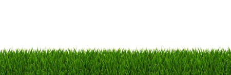 Green Grass Border With Gradient Mesh, Vector Illustration Çizim