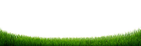 Green Grass Border Isolated, Vector Illustration