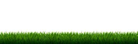 Green Grass Border With Gradient Mesh, Vector Illustration Illustration