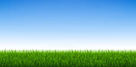 Green Grass And Blue Sky Background, Vector Illustration