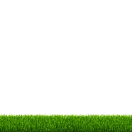Green Grass And White Background Ilustracja